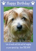 "Norfolk Terrier-Happy Birthday - ""From The Dog"" Theme"